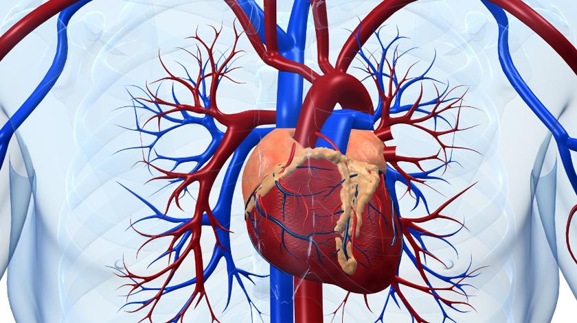 Novo centro especializado em doenças cardiovasculares no Hospital da Cruz Vermelha