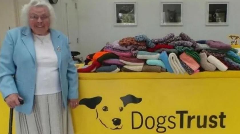 Idosa tricota casacos e mantas para cães