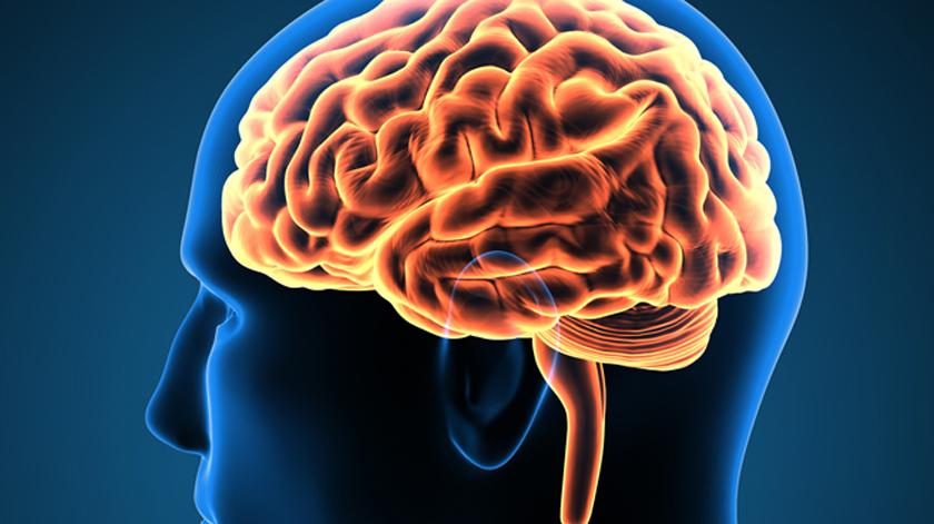 Colesterol em excesso no cérebro pode ter impacto no tratamento de doenças degenerativas