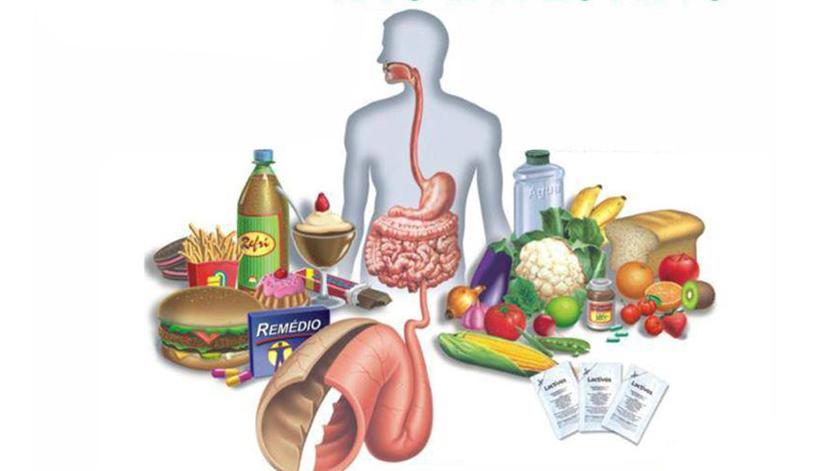 Que alimentos ajudam a regularizar o intestino?