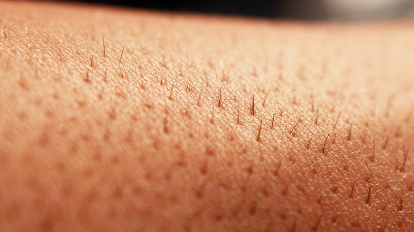 Estudo apresenta novo órgão na pele que deteta a dor