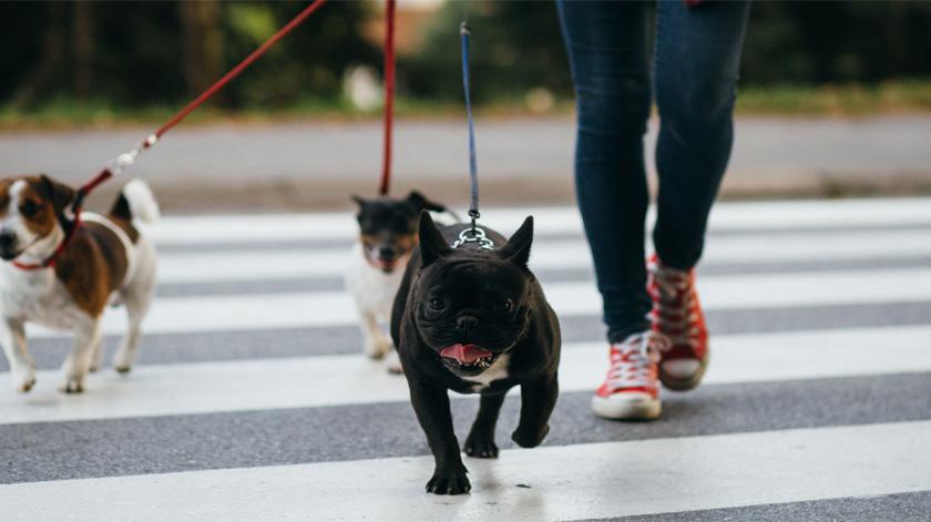 Covid-19: futuros veterinários passeiam cães de idosos