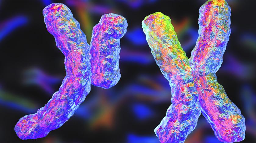 Cromossomas sexuais iguais podem ter relação com longevidade