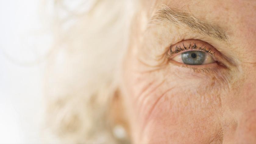 Investigadores do i3S avançam na descoberta de novas terapias anti-envelhecimento