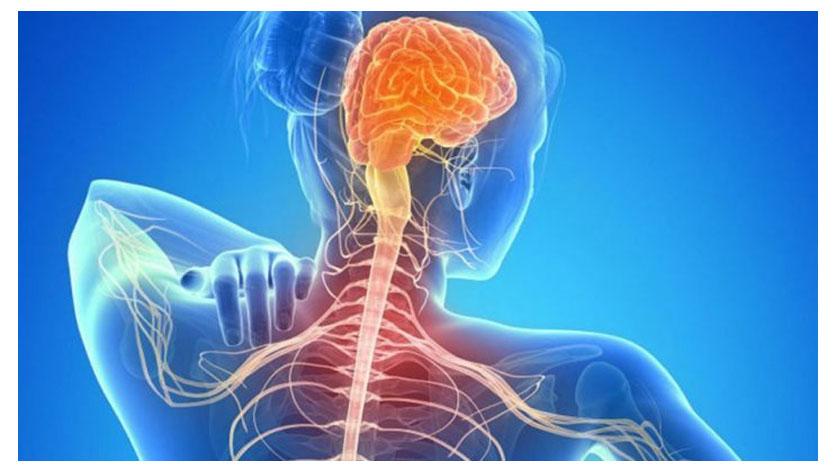 Conferência online: O impacto da Covid-19 nas pessoas com esclerose múltipla