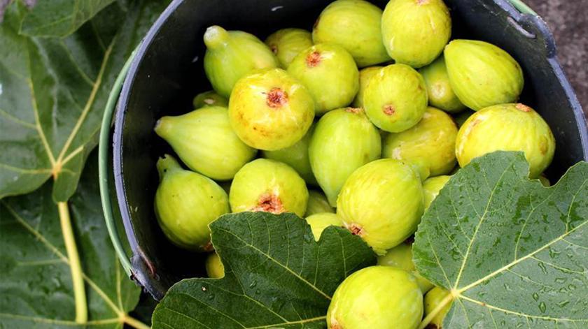 Conheça 5 benefícios do figo para a saúde
