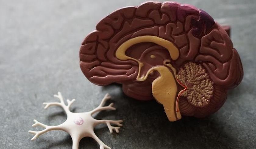 Alzheimer Portugal promove Grupo de Trabalho de Pessoas com Demência