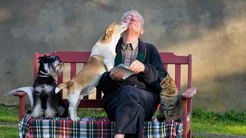 Melhore a sua saúde com um animal de estimação