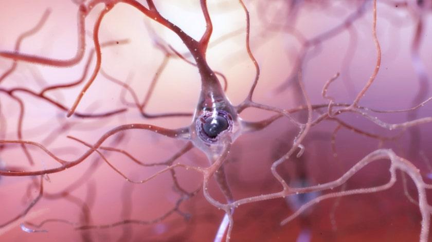 A BlueRock Therapeutics recebe a designação Fast Track da FDA para DA01 no tratamento da doença de Parkinson avançada